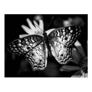 Gemalte Dame Butterfly - Postkarte