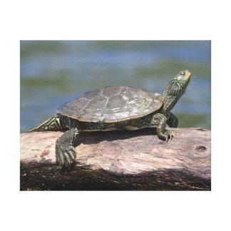 Gemalte Schildkröte an einem sonnigen Tag Leinwanddruck