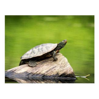 Gemalte Schildkröte auf einem Klotz Postkarte