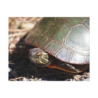 Gemalte Schildkröte Leinwanddruck