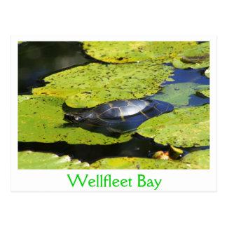 Gemalte Schildkröte-Wasser-Lilie Postkarte
