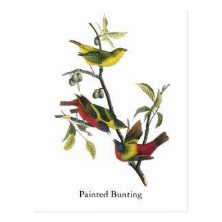 Gemalter Flaggen-Druck Johns Audubon Postkarte