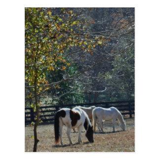 Gemaltes Pferd Browns &White und Creme-Pferd Postkarte