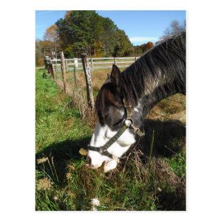 Gemaltes Pferd, Spitze-Blume der Königin-Ann Postkarte