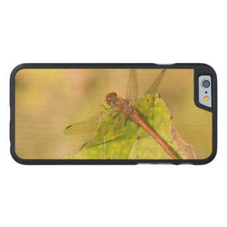 Gemeine Darter-Libelle Carved® iPhone 6 Hülle Ahorn