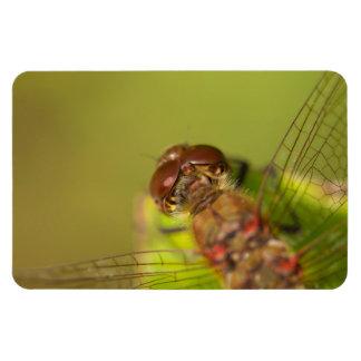 Gemeine Darter-Libelle Magnet