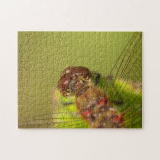 Gemeine Darter-Libelle Puzzle