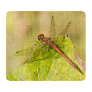 Gemeine Darter-Libelle Schneidebrett