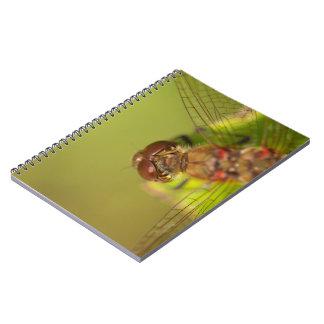 Gemeine Darter-Libelle Spiral Notizblock