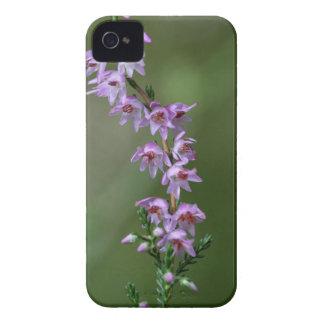 Gemeine Heide (Calluna gemein) Case-Mate iPhone 4 Hülle