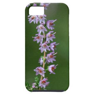 Gemeine Heide (Calluna gemein) Etui Fürs iPhone 5