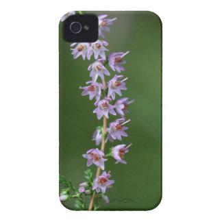 Gemeine Heide (Calluna gemein) iPhone 4 Case-Mate Hülle