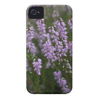 Gemeine Heide (Calluna gemein) iPhone 4 Etuis