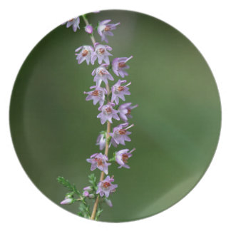 Gemeine Heide (Calluna gemein) Melaminteller