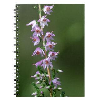 Gemeine Heide (Calluna gemein) Notizblock
