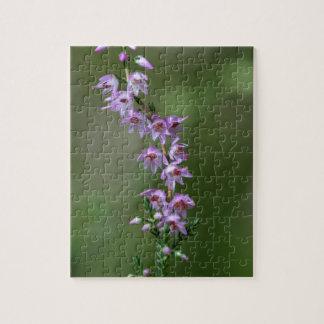 Gemeine Heide (Calluna gemein) Puzzle