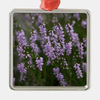 Gemeine Heide (Calluna gemein) Quadratisches Silberfarbenes Ornament