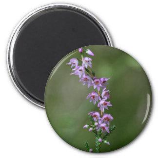 Gemeine Heide (Calluna gemein) Runder Magnet 5,7 Cm