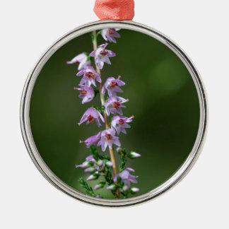 Gemeine Heide (Calluna gemein) Rundes Silberfarbenes Ornament