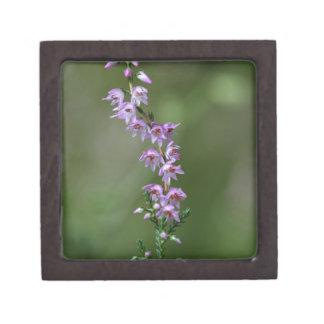 Gemeine Heide (Calluna gemein) Schachtel