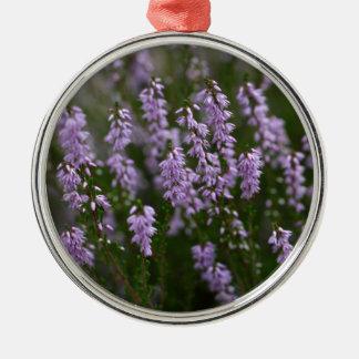 Gemeine Heide (Calluna gemein) Silbernes Ornament