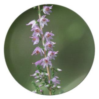 Gemeine Heide (Calluna gemein) Teller