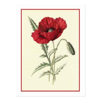 """""""Gemeine Mohnblumen-"""" botanische Illustration Postkarte"""