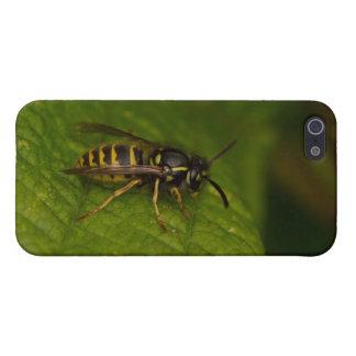 Gemeine Wespe iPhone 5 Hülle
