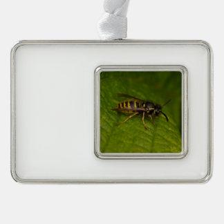 Gemeine Wespe Rahmen-Ornament Silber