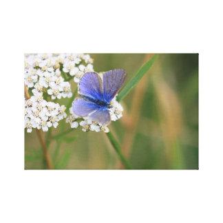 Gemeiner blauer Schmetterling auf Schafgarbe Leinwanddruck