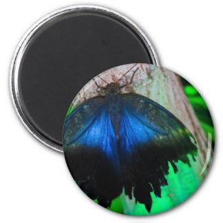 Gemeiner blauer Schmetterling Runder Magnet 5,1 Cm