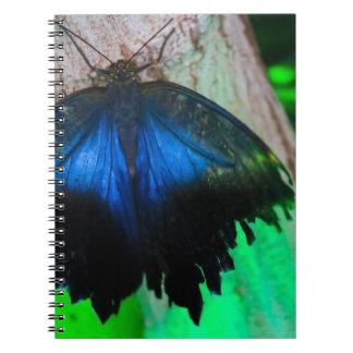 Gemeiner blauer Schmetterling Spiral Notizblock