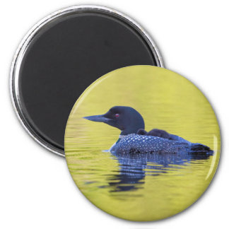Gemeiner Loon auf grünem Wasser Runder Magnet 5,1 Cm