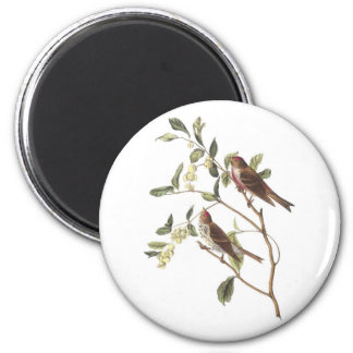 Gemeiner Redpoll durch Audubon Runder Magnet 5,1 Cm