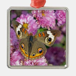 Gemeiner Rosskastanien-Schmetterling Silbernes Ornament