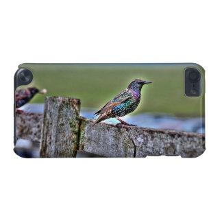 Gemeiner Starling auf einem Zaun nahe Stonehenge iPod Touch 5G Hülle