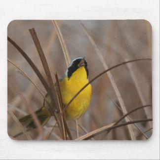 Gemeiner Yellowthroat-Vogel-Tier-Tier-Sumpfgebiete Mousepad