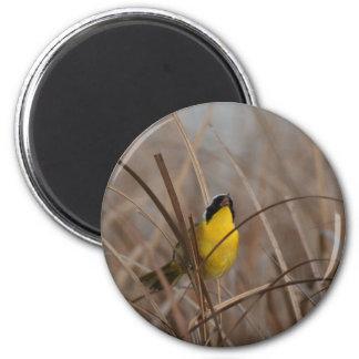 Gemeiner Yellowthroat-Vogel-Tier-Tier-Sumpfgebiete Runder Magnet 5,1 Cm