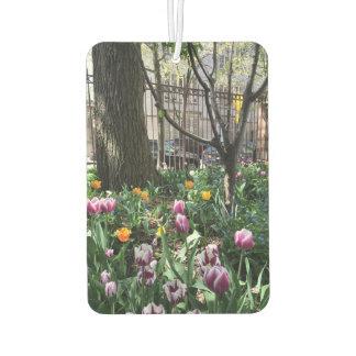 Gemeinschaftsgarten-Frühlings-Tulpe-Blumen NYC mit Autolufterfrischer