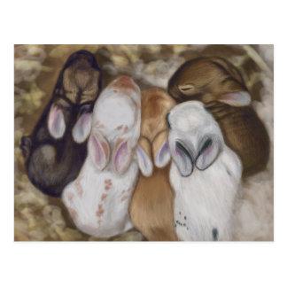Gemütlich Baby-Häschen Postkarte