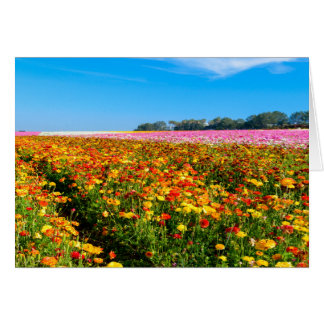Generische Greating Karten-Blumen-Felder Grußkarte