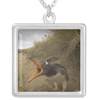 gentoo Pinguin, Pygoscelis Papua, auf Biber Versilberte Kette