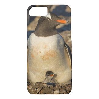 gentoo Pinguin, Pygoscelis Papua, mit neugeborenem iPhone 8/7 Hülle