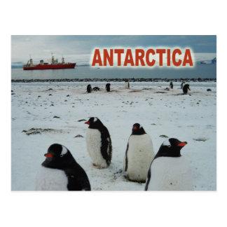 Gentoo Pinguine, antarktische Halbinsel Postkarte