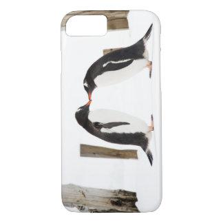 Gentoo Pinguine, die iPhone 7 Fall küssen iPhone 8/7 Hülle