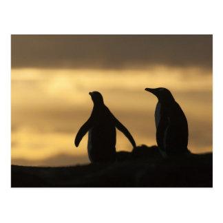 Gentoo PinguinePygoscelis Papua) am Postkarte