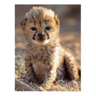 Gepard 19 Tagesaltes männliches Junges Postkarte