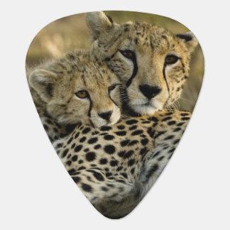 Gepard, Acinonyx jubatus, mit Jungem auf das Masai Plektrum