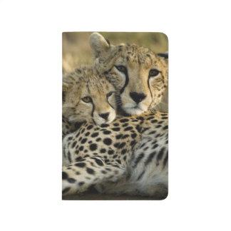 Gepard, Acinonyx jubatus, mit Jungem auf das Masai Taschennotizbuch