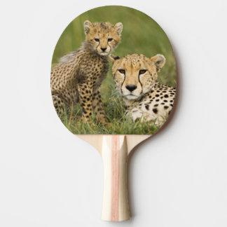 Gepard, Acinonyx jubatus, mit Jungem in Tischtennis Schläger